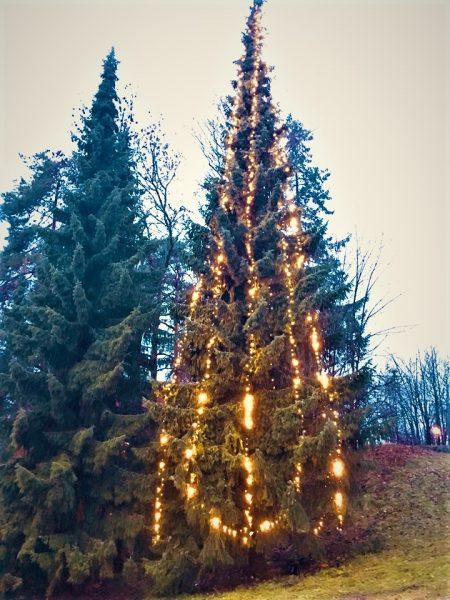 Lokalmiljøet tenner julegrana foran Høvik bibliotek @ Bærum bibliotek Høvik