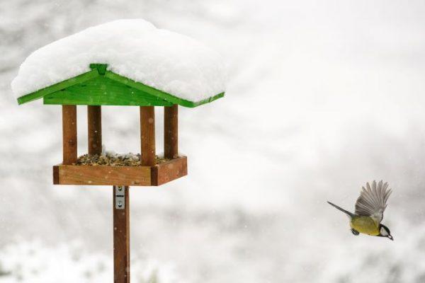 Den grønne timen: Fuglene om vinteren @ Bærum bibliotek Høvik